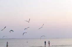 Zeemeeuwen die over het strand vliegen Stock Afbeelding