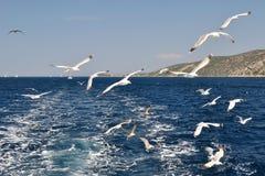 Zeemeeuwen die over overzees achter het schip vliegen Stock Afbeeldingen