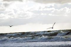 Zeemeeuwen die over overzees vliegen Royalty-vrije Stock Afbeelding