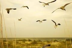 Zeemeeuwen die over strand vliegen. stock foto