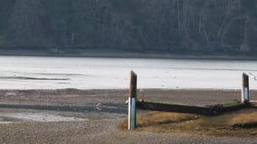 Zeemeeuwen die rond een oude peir vliegen stock video
