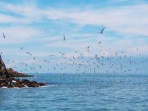 Zeemeeuwen die van het eiland vliegen Royalty-vrije Stock Afbeelding