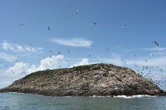 Zeemeeuwen die van het eiland vliegen Stock Foto