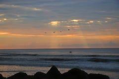 Zeemeeuwen die van het Zuid- dwaasheidsstrand Carolina vliegen royalty-vrije stock afbeelding