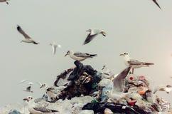 Zeemeeuwen die zich bovenop de stortplaatsstapel bevinden Royalty-vrije Stock Fotografie