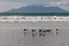 Zeemeeuwen die zich op strand bevinden Royalty-vrije Stock Afbeeldingen