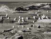 Zeemeeuwen door het overzees Stock Afbeelding