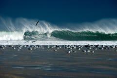 Zeemeeuwen en golven Stock Afbeelding