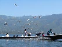 Zeemeeuwen en kano Stock Foto's