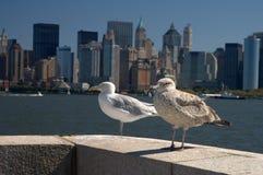 Zeemeeuwen en Manhattan Royalty-vrije Stock Foto's