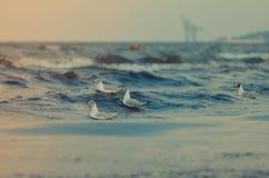 Zeemeeuwen en overzees Stock Afbeeldingen