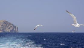 Zeemeeuwen en schepen het kruisen stock foto