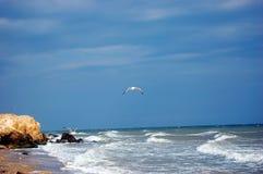 Zeemeeuwen en stormende overzees stock foto