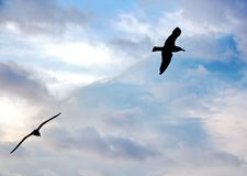 Zeemeeuwen en vogels die in de hemel tegen een achtergrond van witte en kleurrijke wolken en een kustlijn hangen royalty-vrije stock fotografie