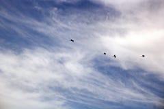 Zeemeeuwen en vogels die in de hemel tegen een achtergrond van witte en kleurrijke wolken en een kustlijn hangen stock fotografie