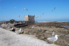 Zeemeeuwen in Essaouira royalty-vrije stock foto's