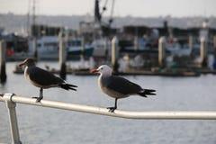 Zeemeeuwen in haven Stock Afbeelding