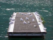 Zeemeeuwen in het overzees stock afbeelding