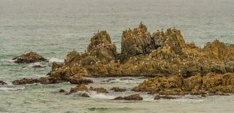Zeemeeuwen in het rotsachtige outcropping worden neergestreken die Royalty-vrije Stock Foto