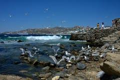 Zeemeeuwen het vliegen en andere in het water Costa Deliziosa-erachter vastgelegd cruiseschip stock foto's