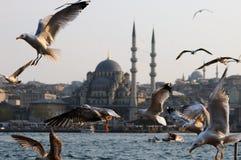 Zeemeeuwen in Istanboel Royalty-vrije Stock Afbeeldingen