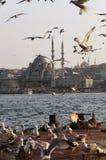 Zeemeeuwen in Istanboel Stock Afbeelding