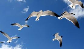 Zeemeeuwen lucht stock foto