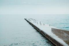Zeemeeuwen op concreet dok op zee royalty-vrije stock fotografie