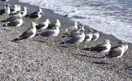 Zeemeeuwen op de kust van het strand royalty-vrije stock afbeeldingen