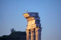 Zeemeeuwen op de oude kolommen royalty-vrije stock fotografie