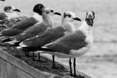 Zeemeeuwen op de pijler stock fotografie