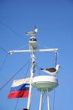 Zeemeeuwen op een mast. stock foto