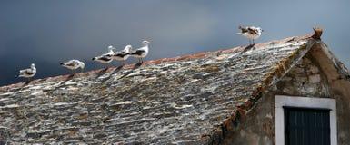 Zeemeeuwen op het dak royalty-vrije stock fotografie