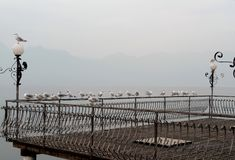 Zeemeeuwen op het meer Como stock afbeeldingen