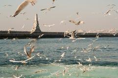 Zeemeeuwen op het Overzees - Istanboel Royalty-vrije Stock Fotografie