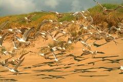 Zeemeeuwen op het strand Royalty-vrije Stock Afbeeldingen