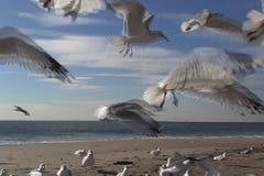 Zeemeeuwen op het strand stock video