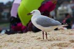 Zeemeeuwen op het strand Royalty-vrije Stock Foto's