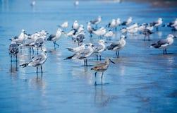 Zeemeeuwen op het strand Royalty-vrije Stock Foto