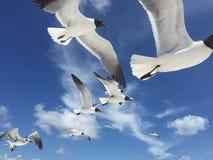Zeemeeuwen op het strand van Florida stock foto