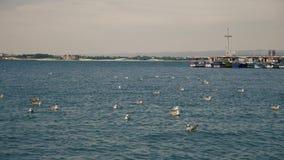 Zeemeeuwen op het water dichtbij haven stock footage