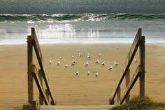 Zeemeeuwen op het zand bij een strand Stock Foto's