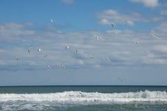 Zeemeeuwen op Myrtle Beach Royalty-vrije Stock Foto's