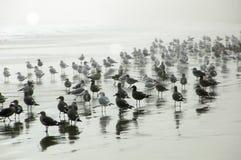 Zeemeeuwen op Nevelig strand Royalty-vrije Stock Afbeeldingen