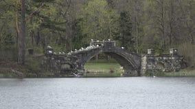 Zeemeeuwen op oude die steen aan de brug op het meer, het park van Gatchina wordt vernietigd Rusland stock videobeelden
