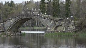 Zeemeeuwen op oude die steen aan de brug op het meer, het park van Gatchina wordt vernietigd Rusland stock footage