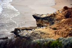 Zeemeeuwen op rotsen op de kustlijn Royalty-vrije Stock Afbeelding