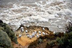 Zeemeeuwen op rotsen op de kustlijn Royalty-vrije Stock Fotografie