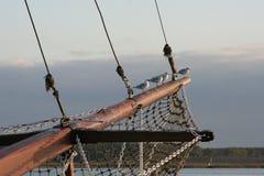 Zeemeeuwen op schipmast Stock Afbeeldingen