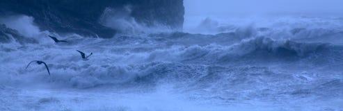 Zeemeeuwen op Stormachtige Overzees Stock Foto's
